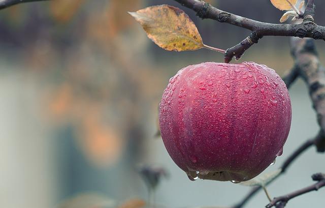 Chłodnia do przechowywania różnych odmian jabłek