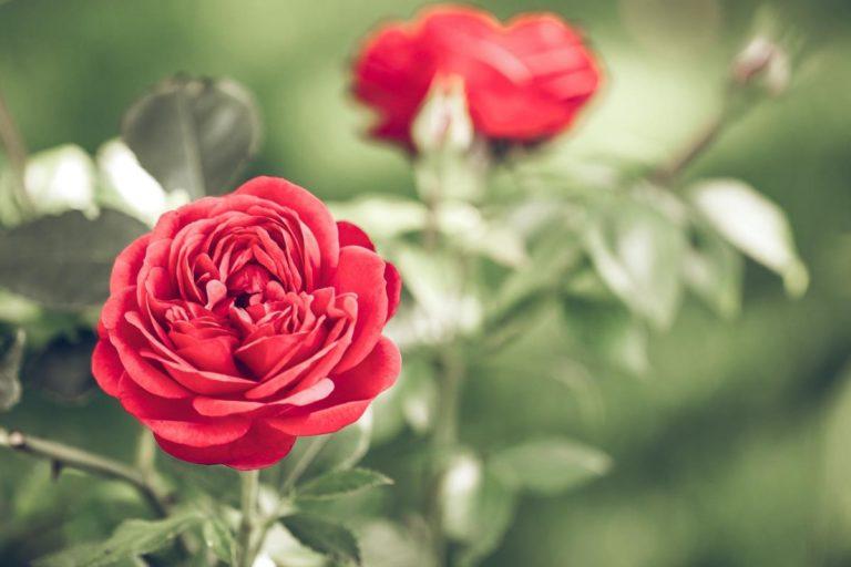 Modne staje się wysyłanie kwiatów przez internet