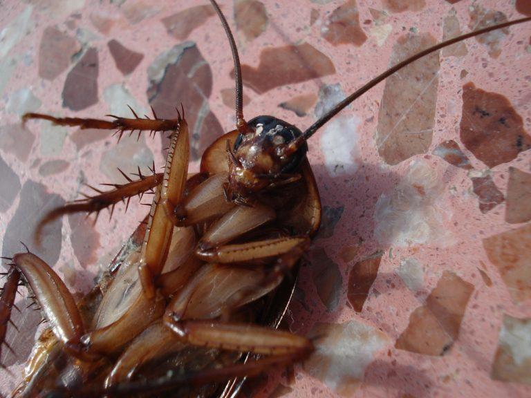 Skuteczne usuwanie robaków, owadów